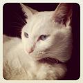 Photos: うちの猫 マオ