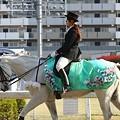 写真: 川崎競馬の誘導馬04月開催 桜Verその1-120409-07-large