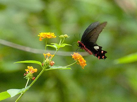 ドイステープの蝶 IMGP125002_R