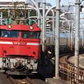 EF81-137+E26系客車尾久車 寝台特急カシオペア号