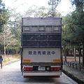 Photos: 競走馬輸送中