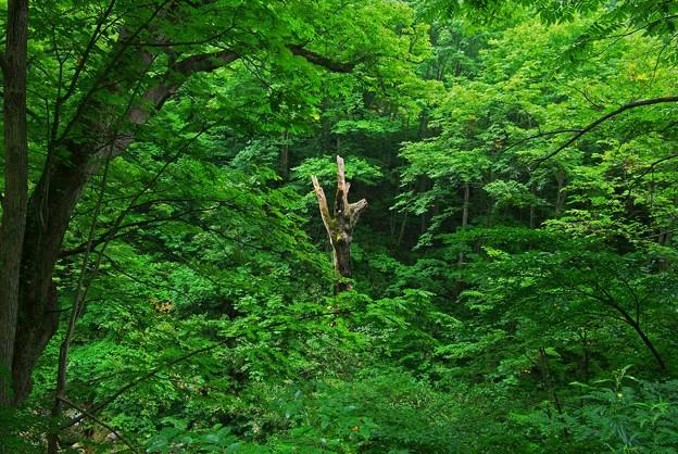 深緑と朽木