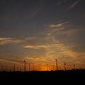 写真: 静岡 牧の原