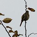写真: 見かけない鳥