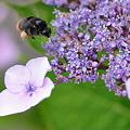 ミツバチ君~飛行