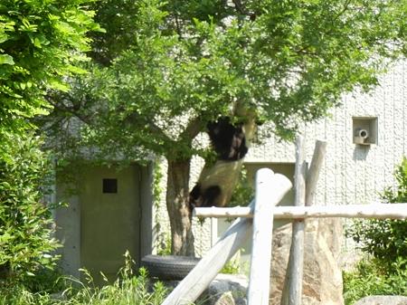 木登りDSCN2509