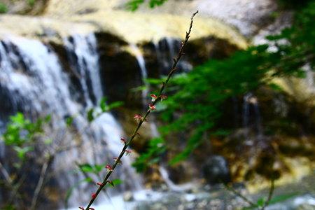 ミズヒキと姥ヶ滝