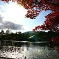 写真: 白樺湖 モミジの紅葉(2)