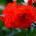 写真: 花房