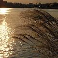 R0026154 - 京浜運河の秋