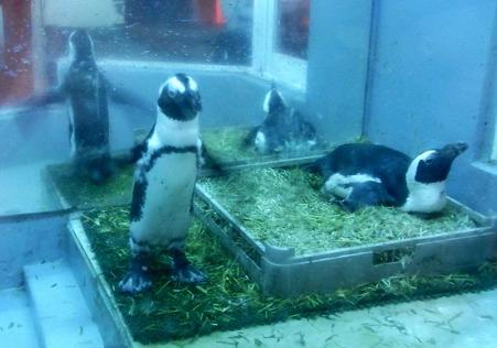 ペンギン居酒屋 泳いだあと