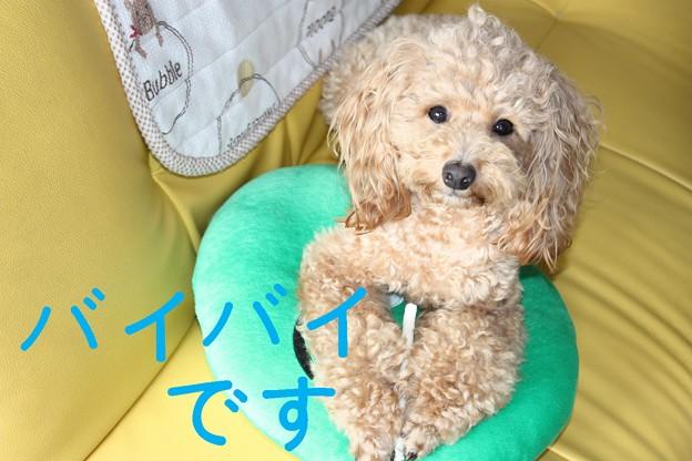 Photos: newソファ☆1