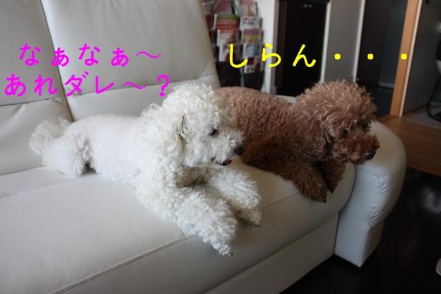 Photos: newソファ☆11