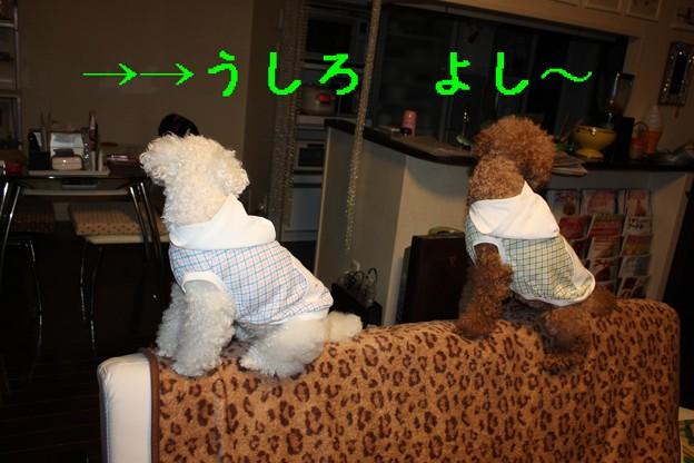 Photos: ソファの上で・・・4