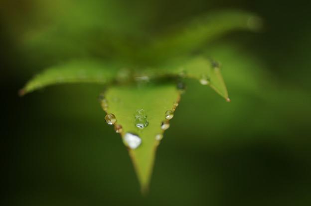 水滴の印象 1