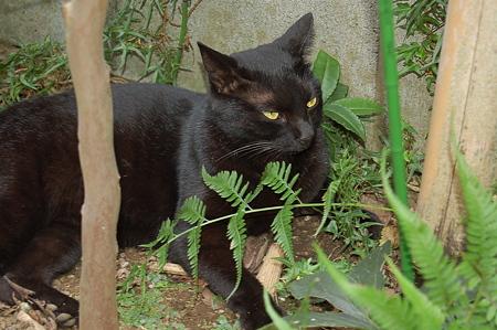 黒猫グ~グウ