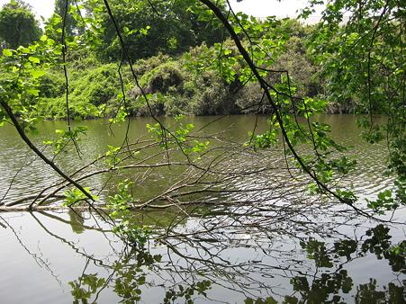 新池 (1)