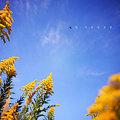 写真: 黄色好き!