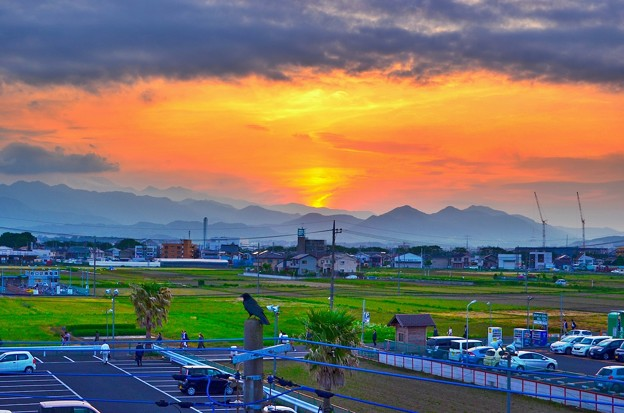 Photos: 夕焼けとカラス