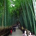 Photos: 天竜寺・竹林の道