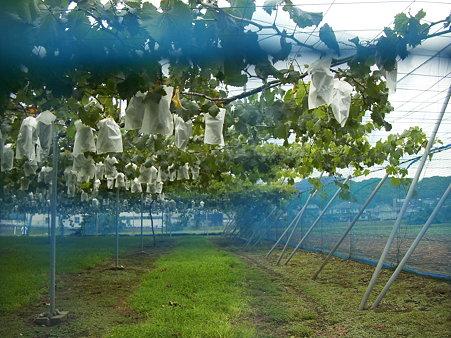 高尾ぶどう農園