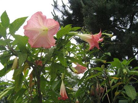 鎌倉で見たお花1