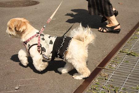 お散歩♪5