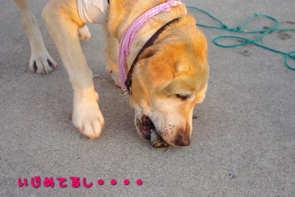s-myu2009_0823(073)
