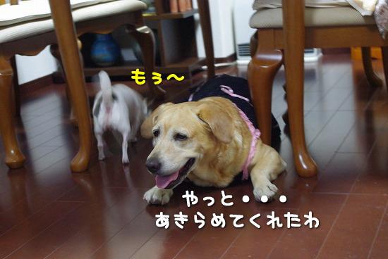 s-myu2009_0913(037)