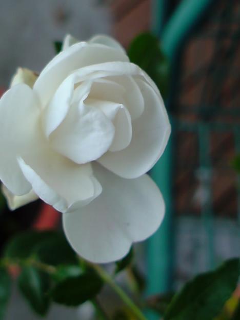 シュネープリンセス 09.9.26