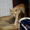 Photos: 2009年7月7日のボクチン(5歳)