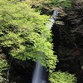 新緑の柱戸不動滝