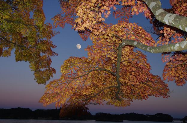 Photos: 十三夜の彩り