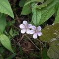 吉田山の花たち