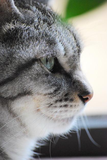 写真: Chavez's Profile 9-12-09