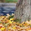 Autumn Leaves 10-25-09