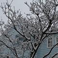 Photos: Snow@My House