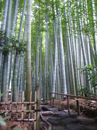 090625-竹林散策