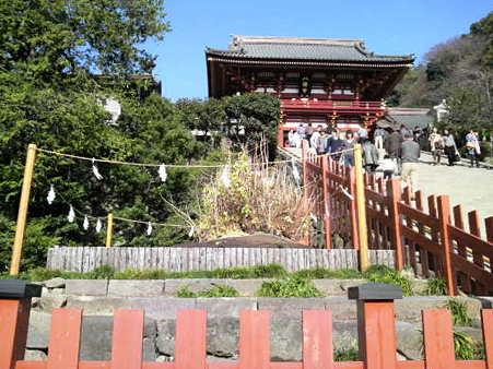 101206-八幡さま銀杏 (2)