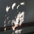 写真: 日食の木漏れ日