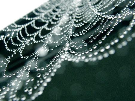 大きくて水滴の豪華なクモの巣