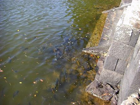 池の海洋生物は二の次