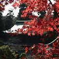 円覚寺境内の紅葉3-20101205