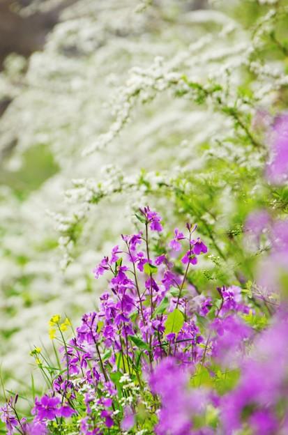 Photos: 春模様。