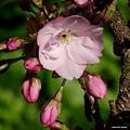 写真: 201104flower 285