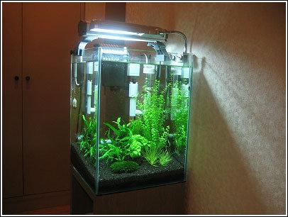 サナトリウム水槽。