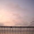 朝釣りの待ち合わせ場所[AGFA 505D]