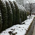 Photos: 建国記念日は雪化粧
