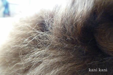 ランの体毛
