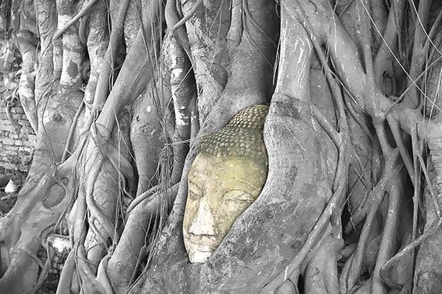 菩提樹に包まれるワット・マハータート